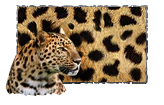 Jaguar paint.png